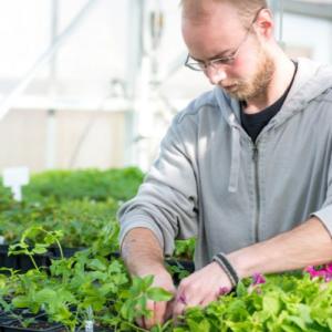 Horticultural Labels